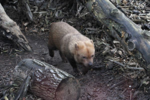 chien buissons zoo de Vincennes