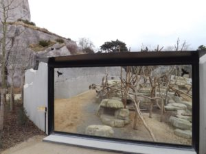 enclos des babouins