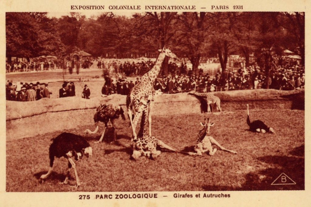 Paris zoo giraffes in 1931