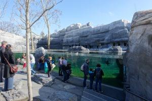 manchots zoo de Vincennes