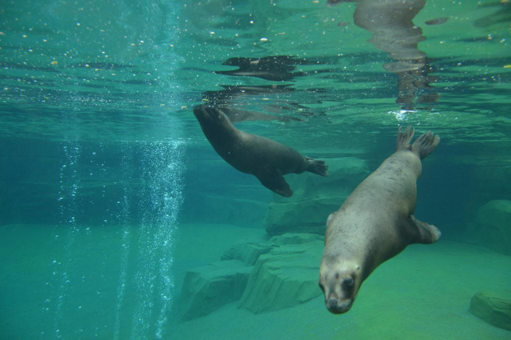 Sea lions Paris Zoo