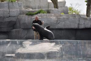 soigneur otarie zoo de Vincennes