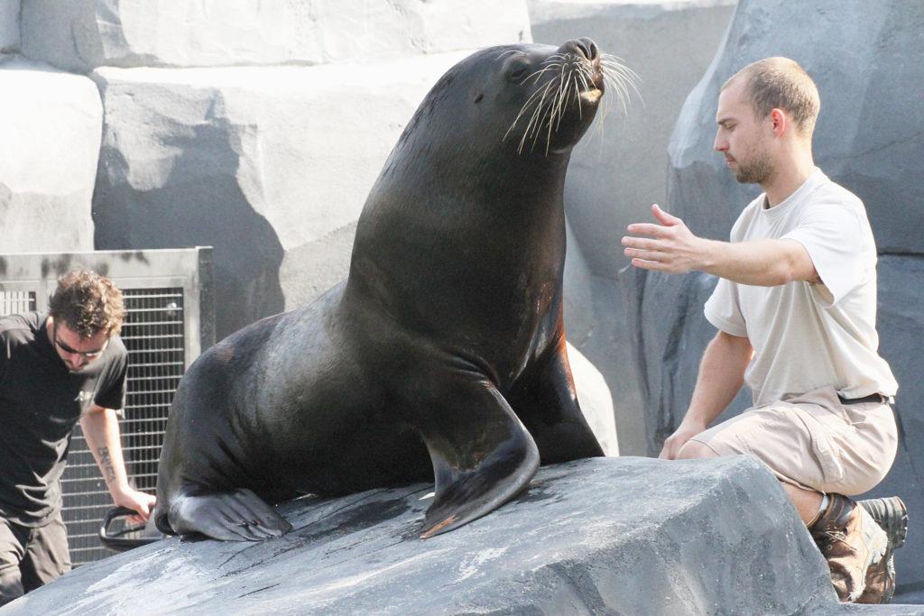 soigneur zoo vincenne